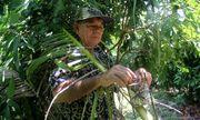 Người đàn ông bỏ 2 ha vườn nhãn để cho đàn vạc