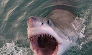 Video: Tưởng bị giành xác cá voi, cá mập trắng hung hãn hai lần lao lên cắn thuyền ngư dân