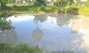 An Giang: Rủ nhau tắm ở hồ sau vườn, 5 em nhỏ đuối nước tử vong