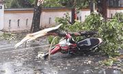 Bão số 5 đổ bộ khiến cây đổ đè chết 1 người, 29 người bị thương