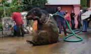 Hoảng hồn phát hiện con chuột to bằng con bò đang ngồi trong đường ống nước ngầm