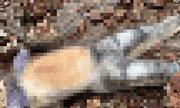 Vụ thi thể nữ đang phân hủy trong ngôi nhà bỏ trống: Người nạn nhân quấn khăn