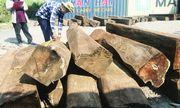 60 container gỗ giáng hương trị giá hơn 20 tỷ đồng bị