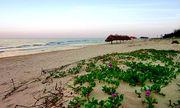 Tin tức đời sống mới nhất ngày 14/10/2020: Ăn loại rau mọc trên bờ biển, 9 người ngộ độc