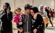 Hơn 600 chiến binh phiến quân IS được thả tự do vì