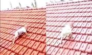 Tin tức đời sống mới nhất ngày 20/10/2020: Xúc động hình ảnh em bé trèo lên mái nhà tránh lũ
