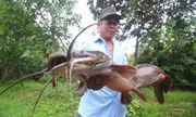 Bơm nước ngoài ruộng, lão nông bắt được cá trê
