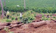 Chuyển đổi đất rừng trái phép, Công ty An Phú Nông bị phạt 251 triệu đồng