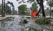 Cận cảnh sức phá hoại khủng khiếp của bão số 9 đổ bộ vào Quảng Ngãi: Cây xa la liệt đổ, thổi bay mái tôn