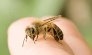 Tin tức đời sống mới nhất ngày 19/11: Hai bố con bị ong đốt hàng trăm nốt