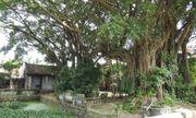 Làng Cổ Am: Quê hương của Trạng Trình Nguyễn Bỉnh Khiêm, nơi trọng người có học hơn kẻ giàu sang