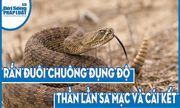 Video: Rắn đuôi chuông đụng độ thằn lằn sa mạc và cái kết bất ngờ