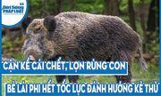 Video: Cận kề cái chết, lợn rừng con bẻ lái phi hết tốc lực đánh hướng kẻ thù