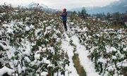 Dự báo thời tiết mới nhất hôm nay 14/12: Miền Bắc rét đậm, rét hại