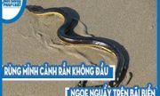 Video: Rùng mình cảnh rắn không đầu ngoe nguẩy trên bãi biển