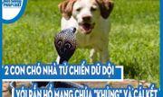 Video: 2 con chó nhà tử chiến dữ dội với rắn hổ mang chúa