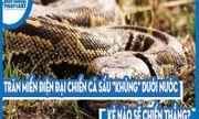 Video: Trăn Miến Điện đại chiến cá sấu