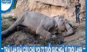 Video: Thái Lan giải cứu chú voi 72 tuổi gục ngã vì trời lạnh