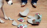 15 điều không nên làm ngày đầu năm mới để tài lộc, may mắn thi nhau