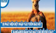 Video: Bị phát hiện đột nhập vào vườn đào hố, Kangaroo đấm vào mặt chủ rồi bỏ chạy