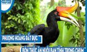 Video hiếm: Phượng hoàng đất đực bón thức ăn nuôi bạn tình trong chum