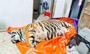 Vụ phát hiện hổ 250kg trong nhà dân ở Hà Tĩnh: Tiết lộ về chủ ngôi nhà
