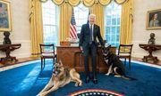 Chó cưng của Tổng thống Biden phải