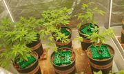 Thanh niên trồng 140 cây cần sa giữa lòng TP.Thủ Đức khai gì?
