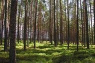 Giáo dục pháp luật - Học sinh Philippines phải trồng 10 cây xanh mới được tốt nghiệp