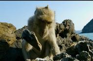 Video-Hot - Video: Ngỡ ngàng trước sự thông minh của khỉ dùng đá đập vỏ để ăn hàu