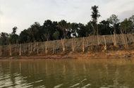 Xã hội - Sơn Tây, Hà Nội: Lợi dụng thi công dự án để lấn chiếm hồ Đồng Mô
