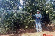 Thị trường - Trở về từ khói lửa chiến tranh, bắt đồi trọc thành rừng xanh kiếm tiền tỷ