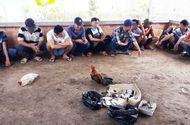 Pháp luật - Bắt quả tang hàng chục đối tượng đá gà ăn tiền phía sau căn biệt thự ở Vĩnh Long