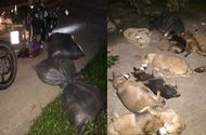 """Pháp luật - Bắt nhóm """"cẩu tặc"""" từ Hà Nội lên Hòa Bình trộm hơn 1 tạ chó"""