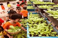 Xã hội - Trường Mầm non Lý Khánh Văn làm tốt công tác đảm bảo vệ sinh an toàn thực phẩm năm học 2019 – 2020