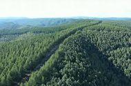 Video-Hot - Video: Trung Quốc kỳ công trồng 93.000 hecta rừng bảo vệ Bắc Kinh trước bão cát