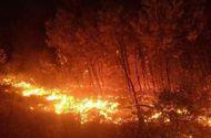 Tin trong nước - Rừng ở Hà Tĩnh, Nghệ An cháy ngùn ngụt, đỏ rực trời trong đêm