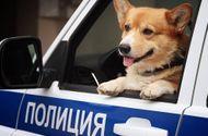 """Cộng đồng mạng - """"Soái cẩu"""" nghiệp vụ Corgi """"nghỉ hưu"""", ngừng hoạt động trong ngành cảnh sát khiến bao người tiếc nuối"""