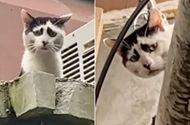 Video-Hot - Video: Mèo hoang nổi tiếng vì có gương mặt khắc khổ đến khó tả