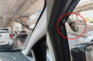 """Cộng đồng mạng - Đang chạy xe trên đường, tài xế ô tô xanh mặt khi thấy """"bé Na"""" nhòm qua kính"""
