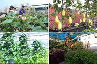 Ăn - Chơi - Video: Biến sân thượng nắng cháy thành khu vườn râm mát, lại có rau trái để ăn
