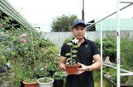 Cần biết - Phạm Thăng Bằng: Thầy giáo phố núi bén duyên với lan rừng