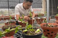 Xã hội - Doanh nhân Nguyễn Văn Thắng tiên phong với mô hình trồng lan Var trên sân thượng