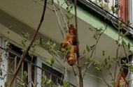 """Cộng đồng mạng - """"Con vật lạ"""" xuất hiện trên cây khiến người dân náo loạn, biết sự thực ai nấy thở phào"""