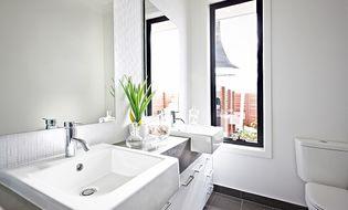 Nhà đẹp - Đặt chậu cây này trong phòng tắm khử mùi hôi hiệu quả, muỗi cũng biến mất dạng