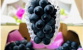 Thị trường - Nho rượu trồng ở Đà Lạt giá 280 nghìn đồng/kg, hàng nhập từ Nhật giá cao gấp 7 lần