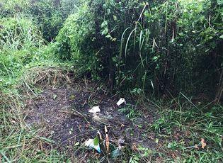 Tin trong nước - Hái rau trong vườn mai, người phụ nữ tá hỏa phát hiện bộ xương người