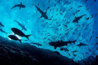Chính thức công nhận đại dương thứ 5 mang tên Nam Đại Dương