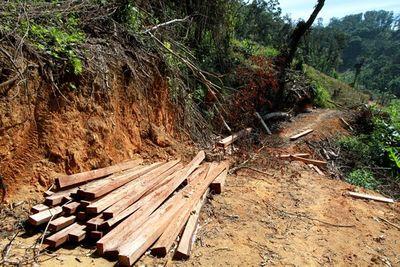 Hơn 20m3 lâm sản ngổn ngang trong rừng nguyên sinh - ảnh 1