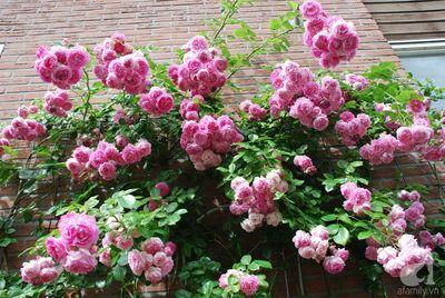Khu vườn hoa nở suốt bốn mùa đẹp như trong mơ - ảnh 1